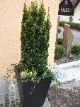 outdoor terassenpflanzen